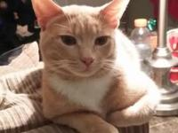 Orange tabby his name is Charlie, Charlie was found in