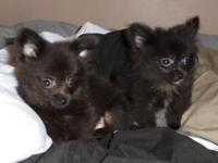 2 males Born May 07, 2015 Ready for their new, FURever