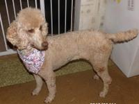 East of Eden Standard Poodles/Greenfield In.  Full