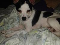 I have 1yr old male terrier rehoming fee $75 to make