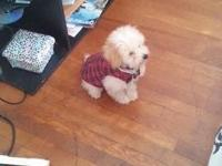 I have a beautiful male toy poodle for sale his name is