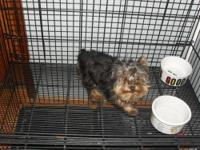 5 month old male yorkie weighs 2.5 lbs good with small