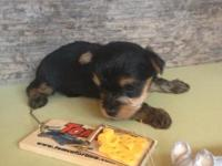Born March 6 he is pick of the litter my male and