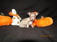 Two Beautiful Male chihuahua puppies available.Our