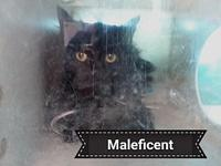 Maleficent's story Say Hello to Maleficent. She is a