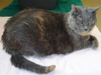 Mali is 12 years old and when she was surrendered she