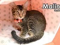 Malin from Taiwan (kitty)'s story My name is Malin from