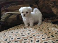 Amazing Breed, Hypoallergenic, Odorless, Non-shedding,