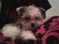 HELLO THERE I HAVE WONDERFUL FEMALE MALTESE, SHE IS A