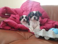A little more than 9 weeks. First set of shot Done.They