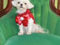 Female Maltese Young Adult for sale She 4 lbs. She has