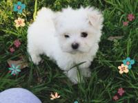 This little guy is frosty,he is such a sweetheart..he