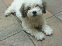 * Meet prince hes a male Maltese mix. Very caring and