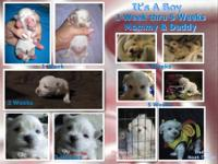 Puppies Born 6 24 ,2013 Male 900 & Female 1,000 The