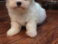 We are selling 4 puppies (3 boys and 1 girl). Purebred,