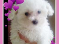 I have two MALTESE PUPPIES to rehome. One FEMALE one