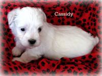 Meet adorable Cassidy! We are pleased to announce the