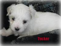 SALE PENDING....Meet handsome Tucker! We are pleased to