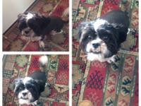 Rehoming our 1 year old Male Shih-Tzu Maltese mix. Not