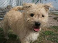 Maltese - Tuffy & Scruffy - Small - Senior - Male -