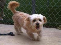 Maltese - Elliott - Small - Adult - Male - Dog Meet