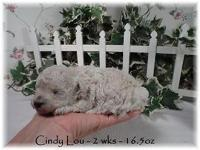 Cindy Lou is a sweetie with a gorgeous thick coat Est