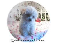 Emmie is an absolute love! She is cute as a button and