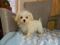 Izzie is a spunky little girl! Est adult size 5-6 lbs