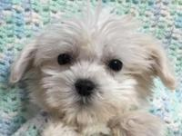 These cuties will snuggle their way into your heart
