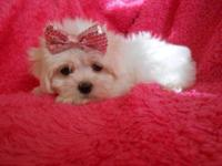 Litter due first week of July!..mother is a AKC Maltese