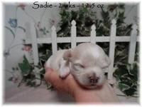 Sweet Sadie is light apricot and will probably lighten