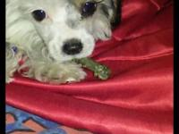 Last female Maltipoo left she is tiny and the smallest