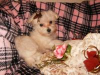 HELLO LIL JAYDEN RAE IS A TINY LITTLE MALTIPOO- -SHE
