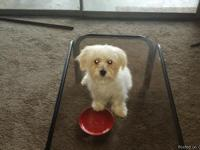 Hi i have a small maltipoo's mix 6months old weighting