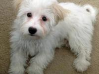Lovable, healthy and strong puppies with pedigree,