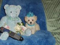 The first baby boy pictured with the blue bear was born