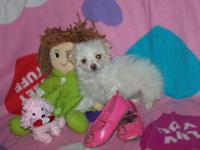 This is Kendra she is a maltipoo puppy that would love