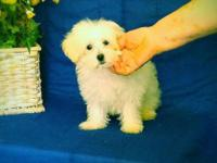 Snowball is 3 months old he is so sweet and such a