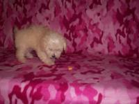 Hope's D.O.B 05-05-2015 registered and she is cream she