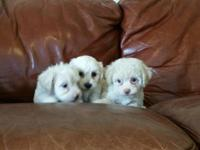 Eight weeks first set shot done playful,loving, inside