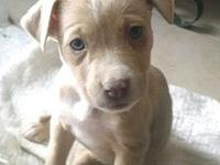 Mama Maddie Puppy - Josie's story Please visit our