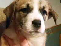Mama Marble (Tinsley) Puppy Bindi's story Please visit