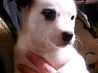 Mama Marble (Tinsley) Puppy Panda's story Please visit