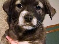 Mama Marble (Tinsley) Puppy Sedie's story Please visit