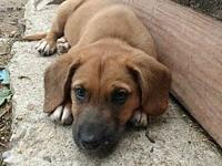 Mama Molly Puppy - Ginny's story Please visit our