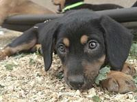 Mama Molly Puppy - Lily's story Please visit our
