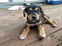 Mama Molly Puppy - Oliver's story Please visit our