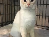 Mama is a  lovely siamese mix who is 1 year old  She is