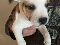 Mama Pita's Puppy - Christian's story Christian is