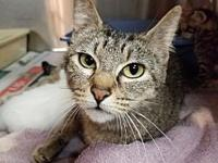 Mama Tab's story By adopting me today you will save the